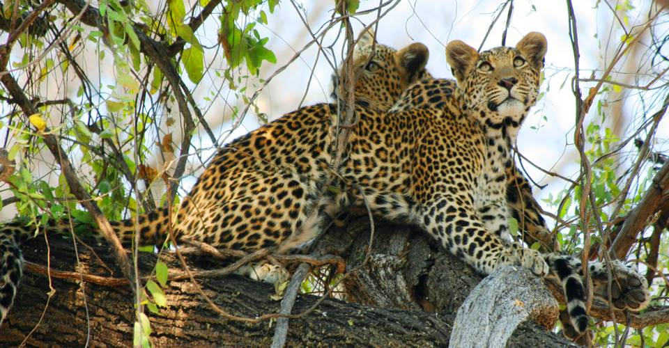 Chobe game drives