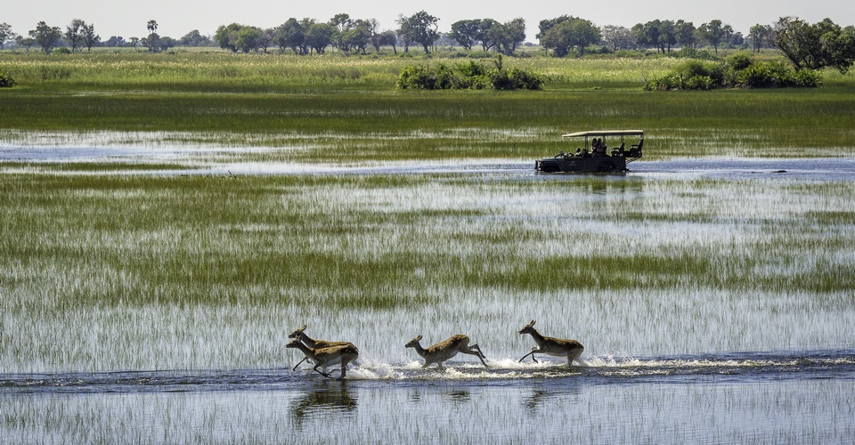 Botswana summer safari