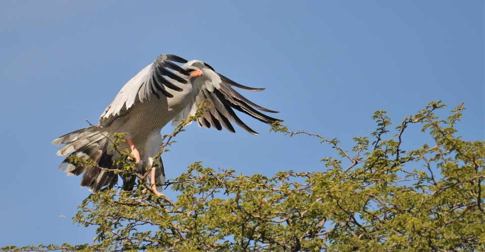 Chobe photographic Tour