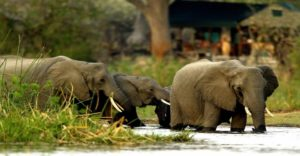Chobe National Park in Botswana Boat cruise & game drive