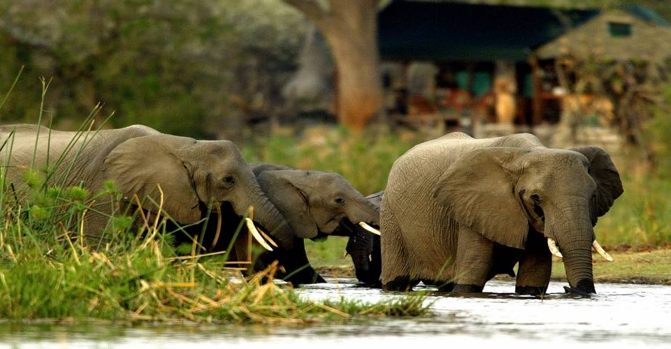 Chobe National Park in Botswana Boat cruise & game drive