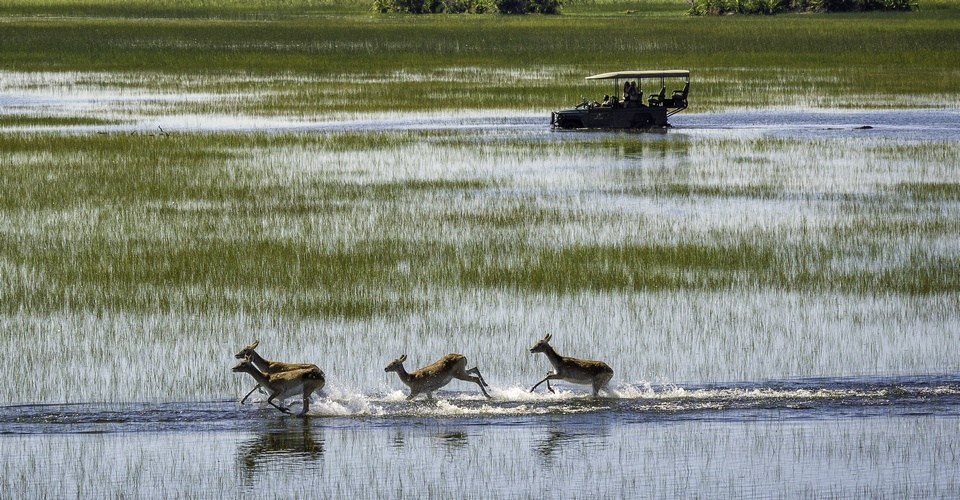 Boat cruise & game drive in Chobe National Park