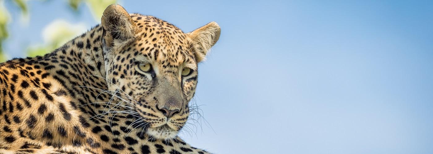 Pangolin Photo Safari – Botswana in Focus