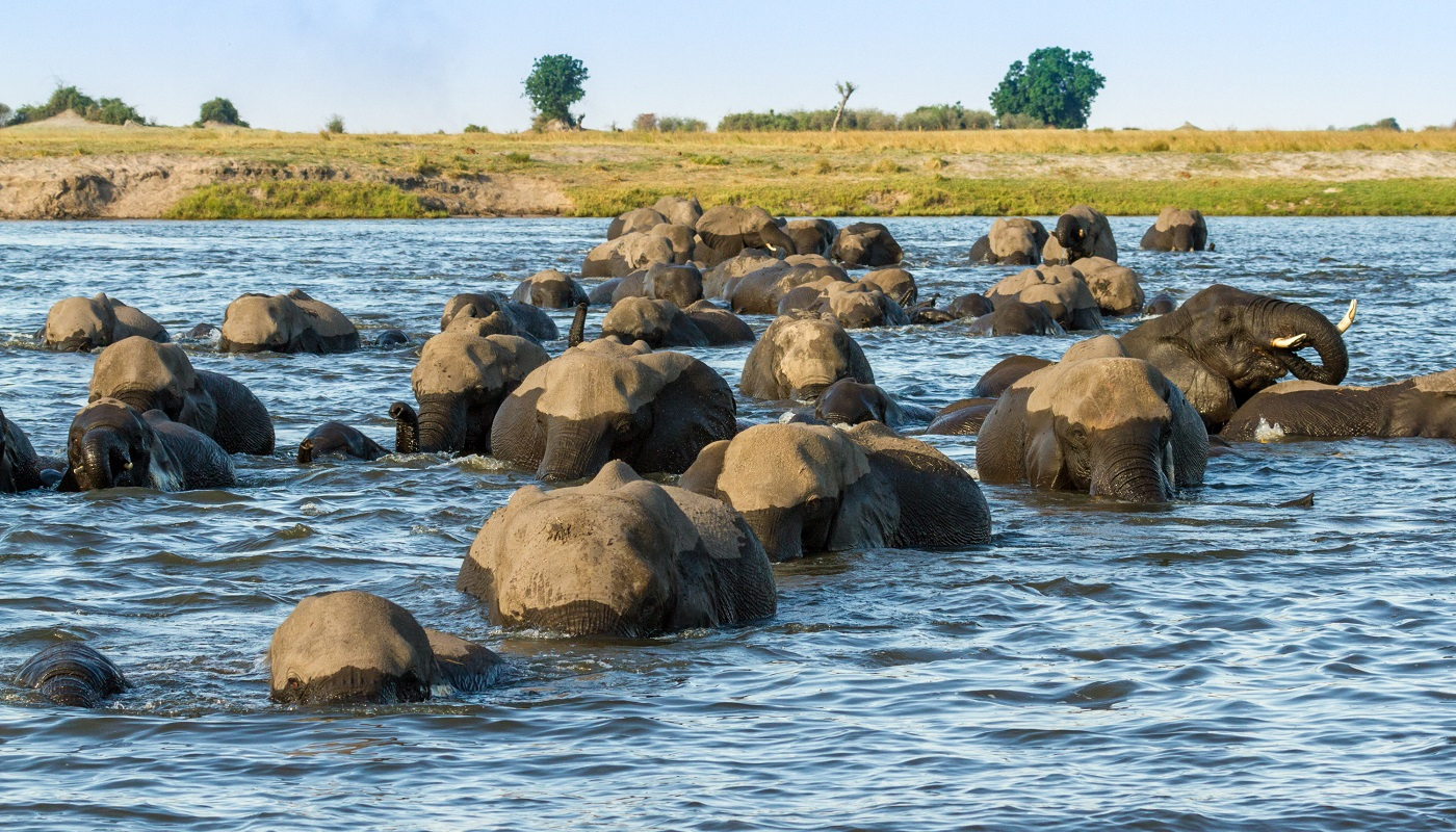 See the Chobe and Savuti on safari