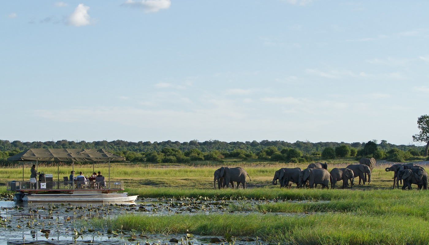 Get up close to elephants in Chobe National Park