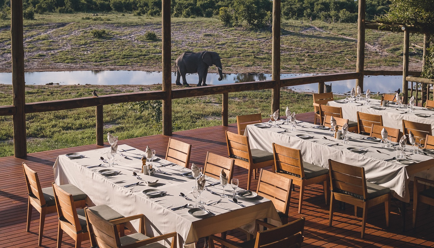 Dine near the passing wildlife
