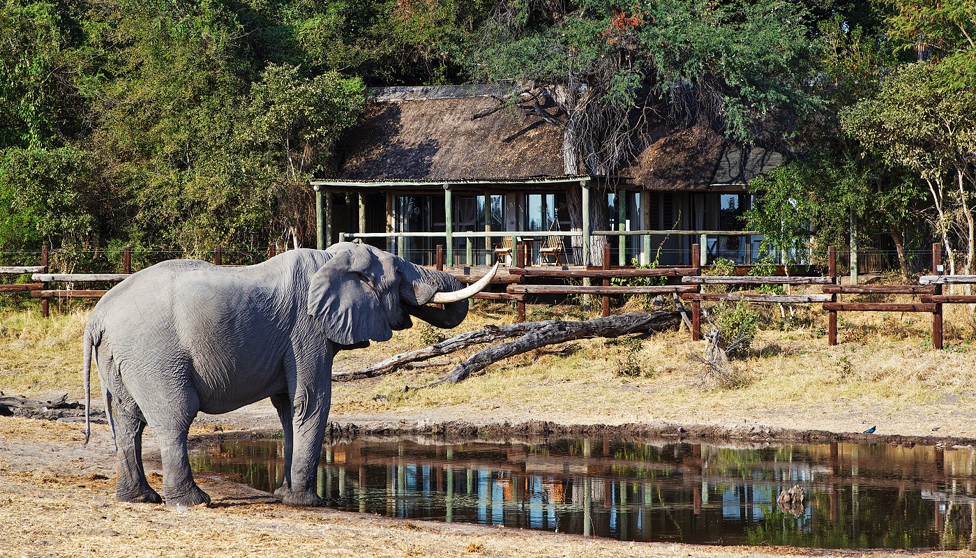 Get up close to African wildlife in Botswana!