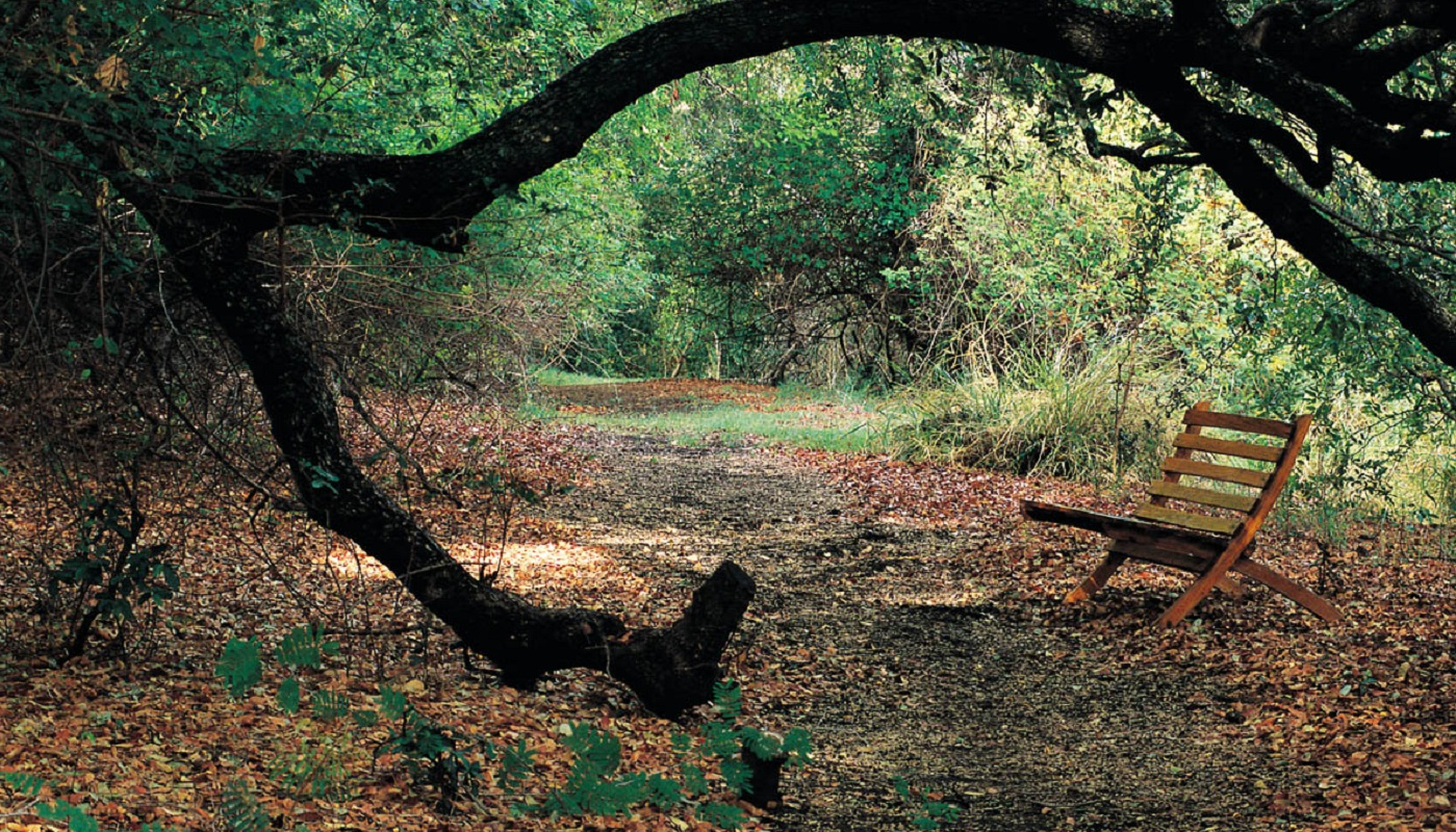 Go for walks along the nature trail